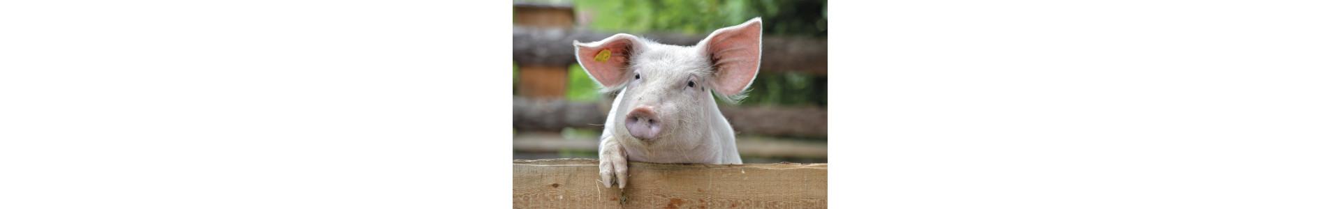 Porc et procelet